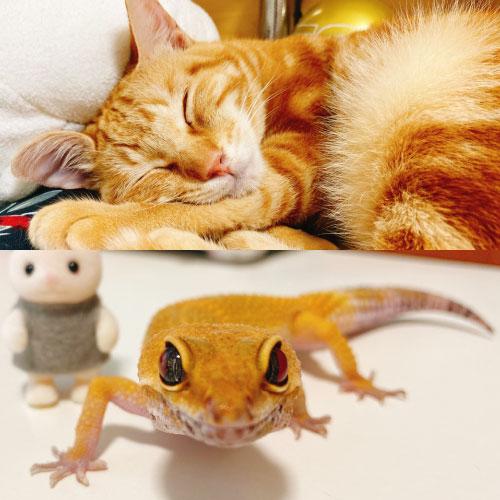 猫とヤモリ